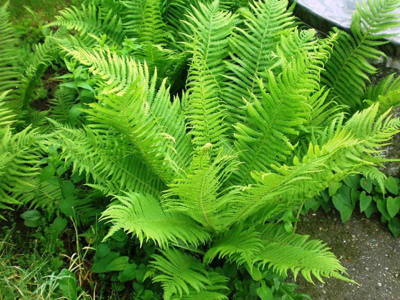 Алфавитный список растений от А до Я  Комнатные растения