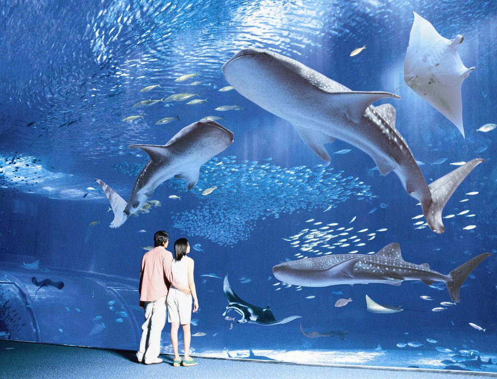 Okinawa Churaumi Aquarium, Япония