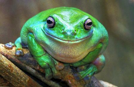 лягушка улыбается