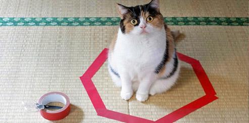 пойманый кот