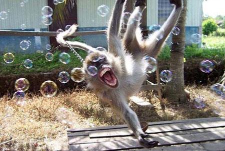 активная обезьяна