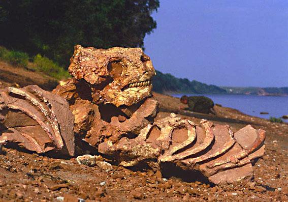 кладбище палеозавров