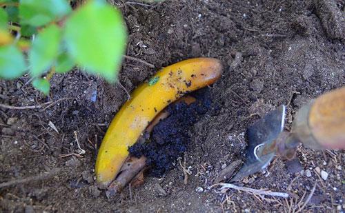 банановая кожура как удобрение