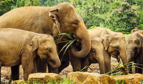 слон ест