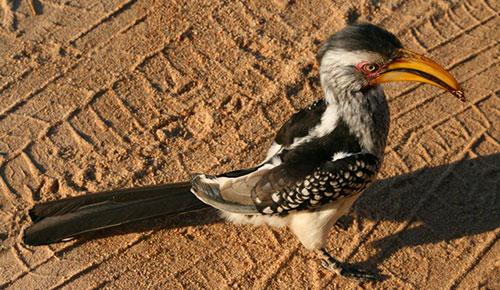 Птица национального парка Крюгер