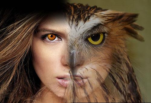 Колдунья превращается в сову