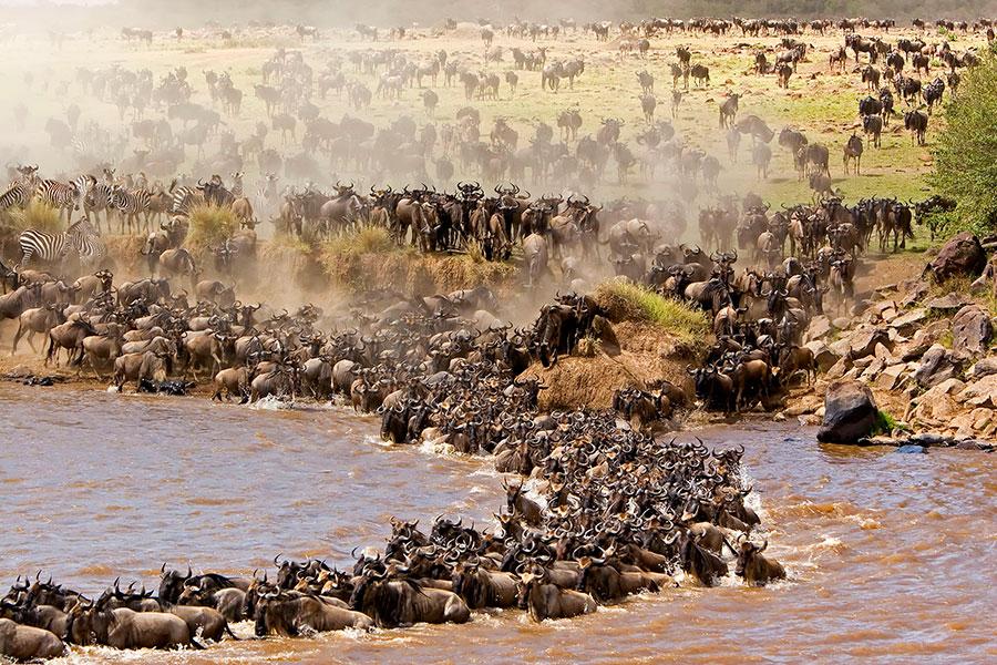 Миграция животных в парке