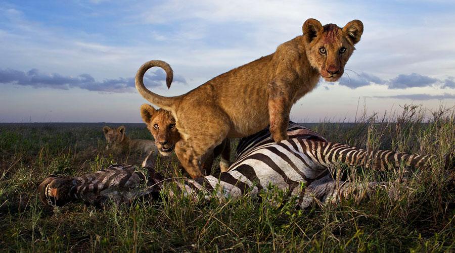 Охота хищников