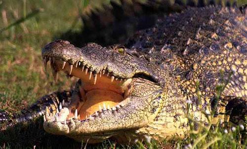 парк Крокотаун