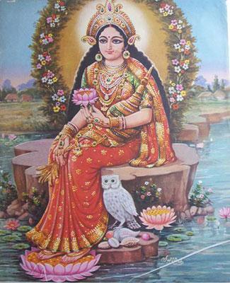 Сова в Индии