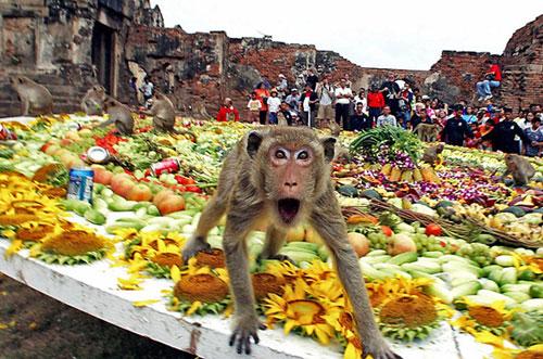 обезьяний банкет