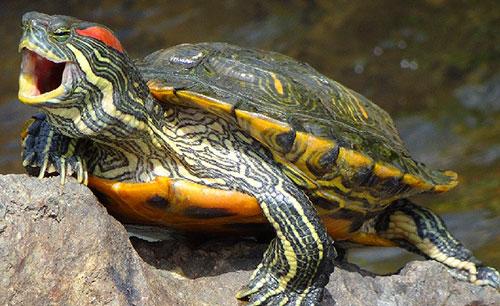 Что символизирует черепаха?