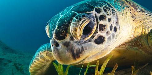 Что символизирует черепаха