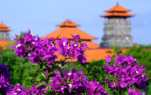 цветы на острове Бали