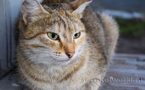 Кот - домашний питомец