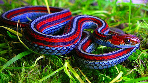 Яркие змеи