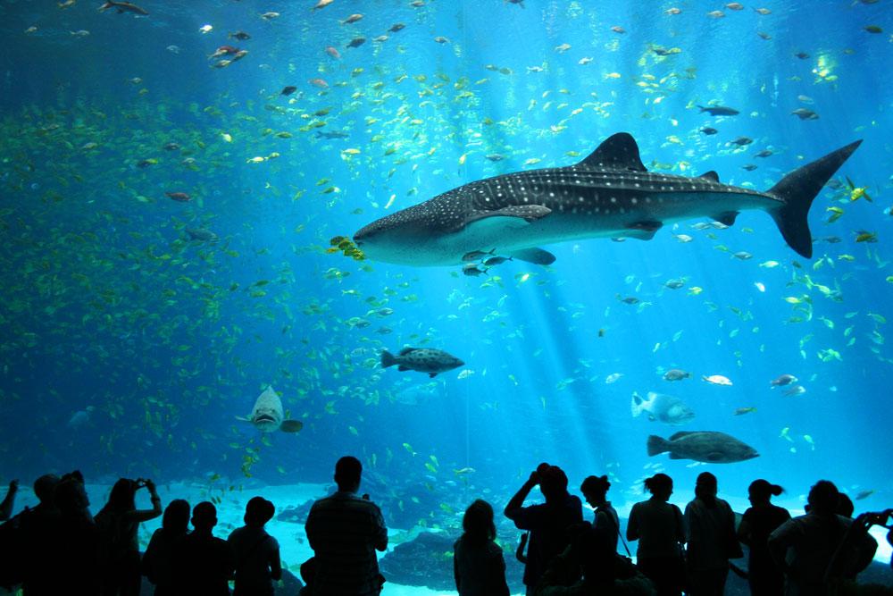Georgia Aquarium, Атланта