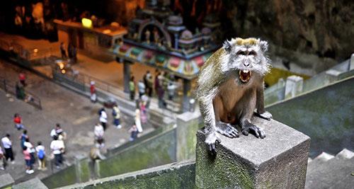 обезьнка в пещерах бату