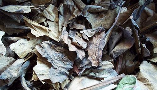 сушеные листья бадана