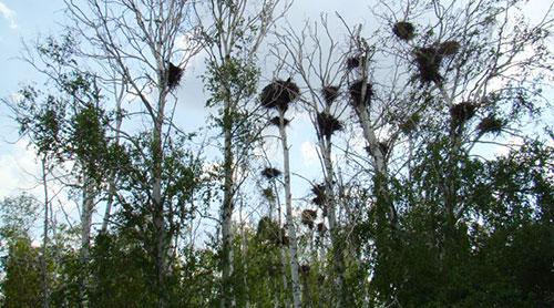 Лес Аркаима с гнездами