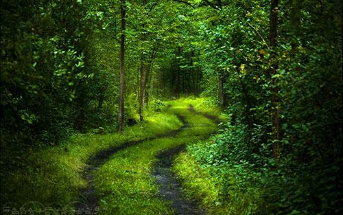 Вход в лес. Правила поведения в лесу
