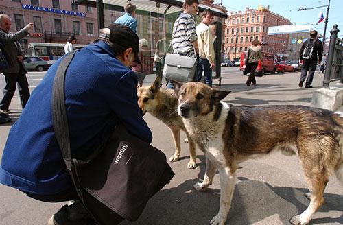 кормить бездомную собаку