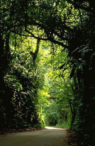 джунгли северных марианских островов