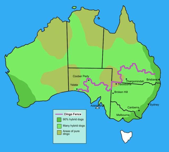 Забор Австралии