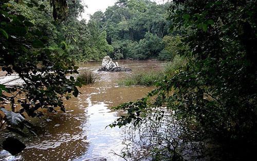 Леса Какамеги в Кении