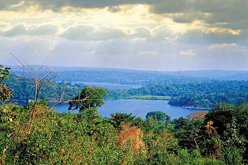 Природа вокруг озера Виктория