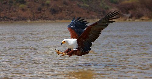 Птицы озера Виктория