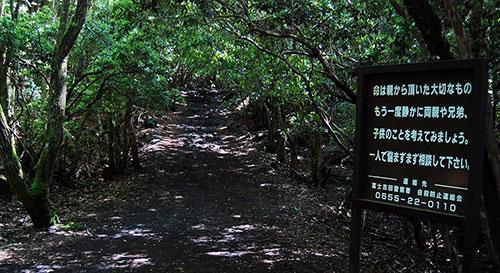 Таблички в японском лесу