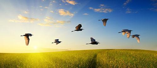 Птицы жаворонки